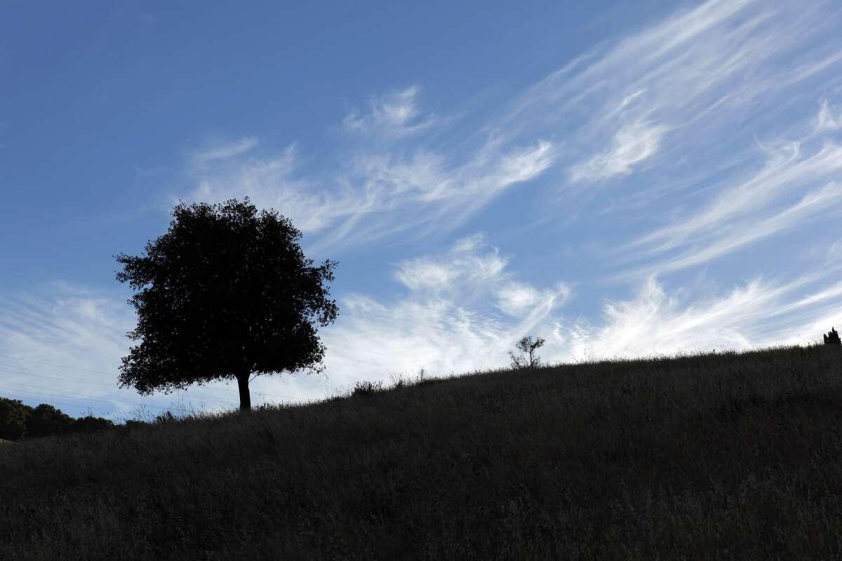 A lone tree sits on the hills above Black Diamond Mines Regional Preserve.