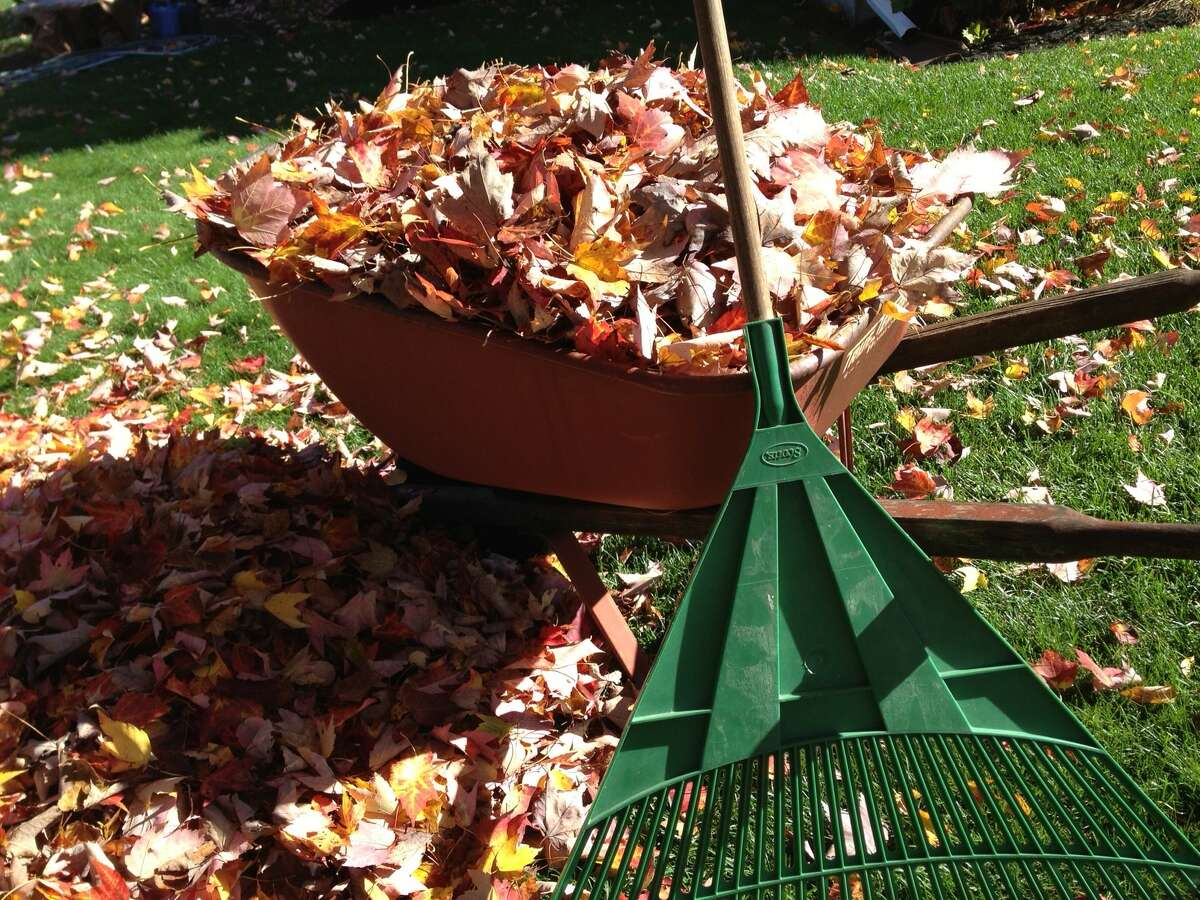FILE. Letter writer notes unexpected leaf-raking help reminded her of people's good will. (Times Union archive)