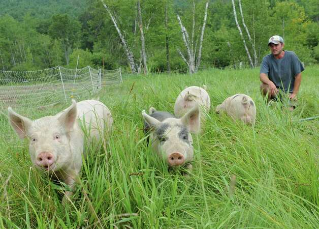 Nathan Winters watches his pigs graze in the tall grass at Hill Hollow Farm on Thursday, Aug, 1, 2013 in Petersburg, N.Y.  (Lori Van Buren / Times Union) ORG XMIT: MER2013080512150806 Photo: Lori Van Buren / 00023341A