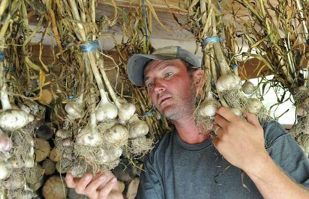 Nathan Winters checks garlic that is hanging to dry at Hill Hollow Farm on Thursday, Aug, 1, 2013 in Petersburg, N.Y.  (Lori Van Buren / Times Union) ORG XMIT: MER2013080512161318 Photo: Lori Van Buren / 00023341A