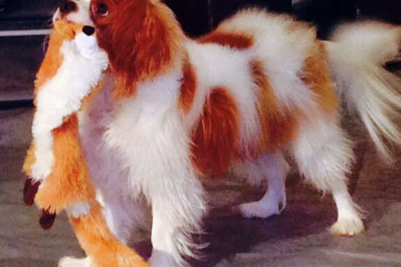 Bentley will be tested once more for Ebola before his quarantine period ends Nov. 1.
