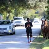 Darius Robinson, 11, walks his horse Tuesday near where an SUV hit a horse and rider Sunday night.
