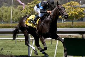 Shared Belief rebounds from only loss with Santa Anita win - Photo
