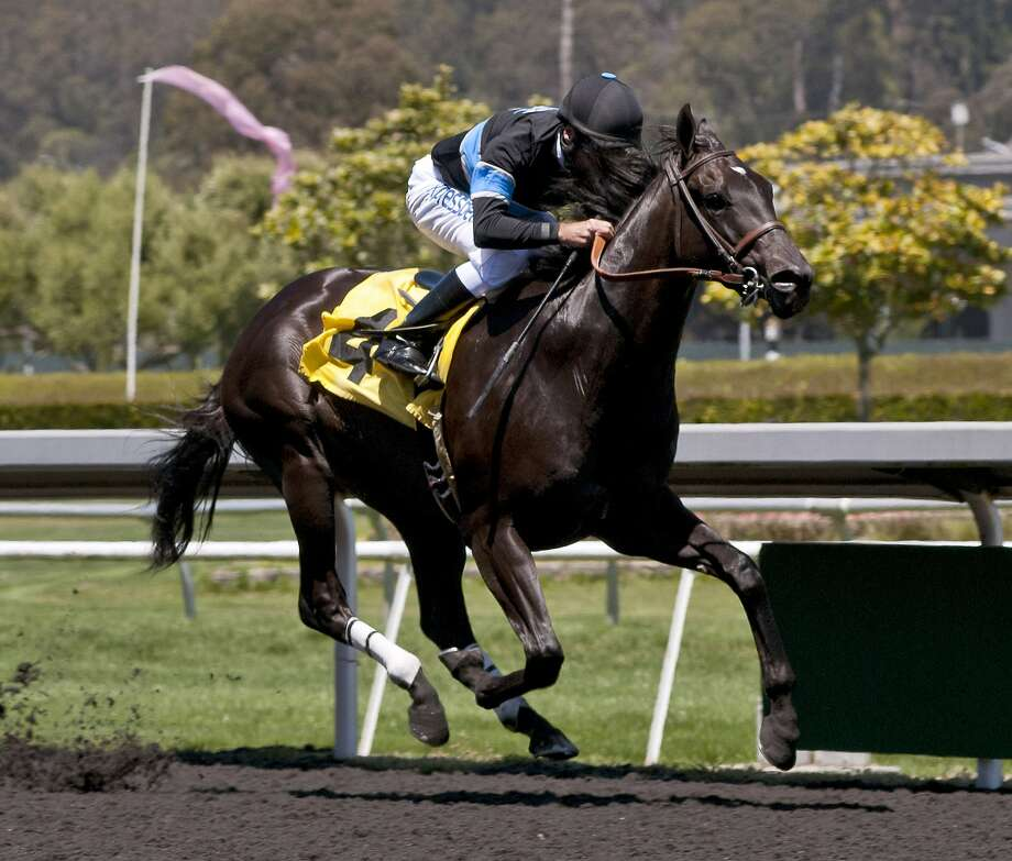 Shared Belief - shown here ridden by Russell Baze during an allowance race victory at Golden Gate Fields on May 26 - is among the favorites in Sunday's $1 million Pacific Classic at Del Mar. Shred Belief is trained by Jerry Hollendorfer. 8-22-14 Photo: Vassar Photography