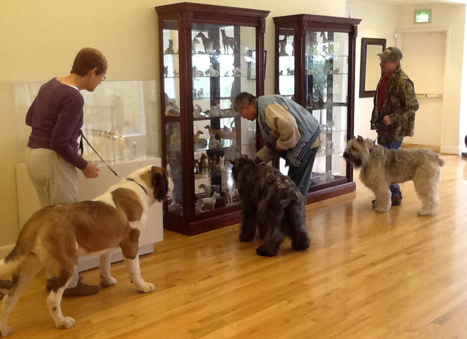This Oct. 11, 2014 photo provided by the American Kennel Club Museum of the Dog in Queeny Park in St. Louis shows visitors looking at museum exhibits accompanied by their dogs. The museum is filled with dog art _ paintings, sculptures, porcelain figures and more _ and visitors are allowed to bring leashed dogs along on their visits. (AP Photo/ American Kennel Club Museum of the Dog, Diane Saltzman)  ORG XMIT: MER2014101515053164 Photo: Diane Saltzman / American Kennel Club Museum of t