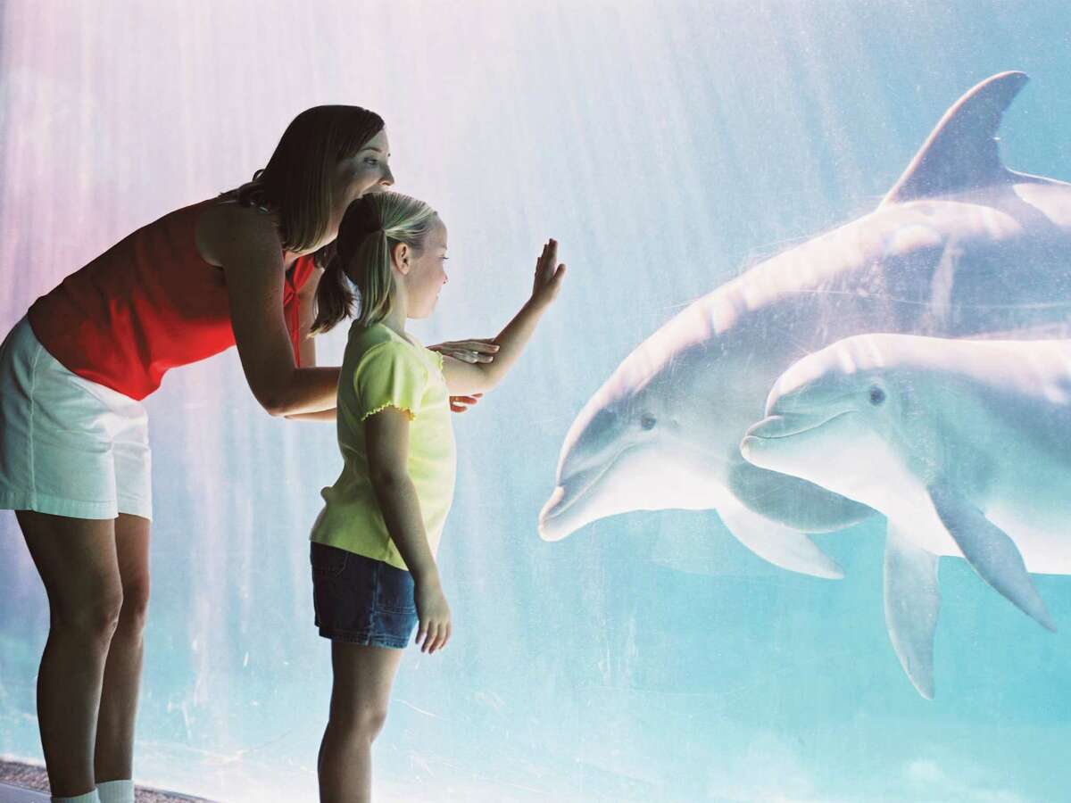 SeaWorld San Antonio next spring will start construction on a new dolphin habitat in the northern part of the park. The changes, which SeaWorld will unveil in 2016, will feature a coastal theme. Courtesy SeaWorld Entertainment Inc.