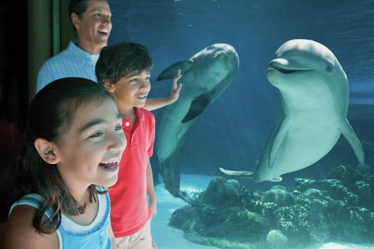 SeaWorld San Antonio's new dolphin habitat, Dolphin Lagoon, is set to open in late spring before Memorial Day. Visitors will be able to view the dolphins through a large window after paying regular park admission. They will have the option of paying extra to get in the water with dolphins for about a half hour.