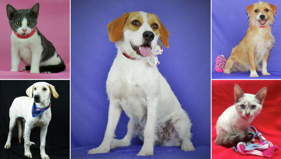 These animals are available for adoption from the Houston Humane Society. Photo: Houston Humane Society Composite Photo