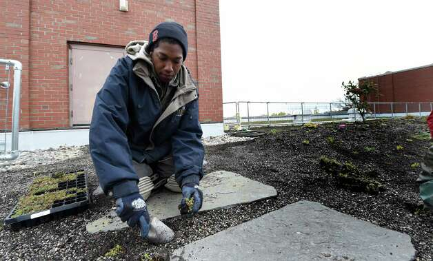 "Project manager Akil Williams of Apex Green Roofs plants some of the hundreds of grasses and perennials on the mammoth ""green roof"" on the top of Doane Stuart School Wednesday afternoon Oct. 22, 2014 in Rensselaer, N.Y.    (Skip Dickstein/Times Union) Photo: SKIP DICKSTEIN / 00029195A"