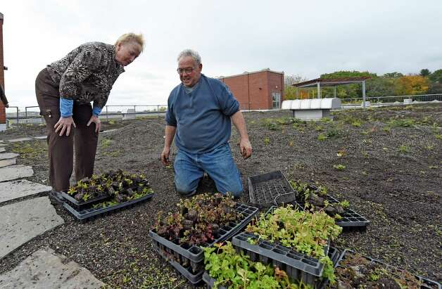 "Gardner Don Lurie speaks with head of school Pamela Clark during a break in planting some of the hundreds of grasses and perennials on the mammoth ""green roof"" on the top of Doane Stuart School Wednesday afternoon Oct. 22, 2014 in Rensselaer, N.Y.    (Skip Dickstein/Times Union) Photo: SKIP DICKSTEIN / 00029195A"
