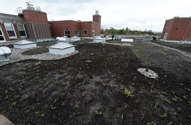 "Some of the hundreds of grasses and perennials on the mammoth ""green roof"" on the top of Doane Stuart School Wednesday afternoon Oct. 22, 2014 in Rensselaer, N.Y.    (Skip Dickstein/Times Union) Photo: SKIP DICKSTEIN / 00029195A"