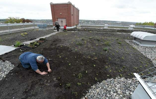 "Gardner Don Lurie plants some of the hundreds of grasses and perennials on the mammoth ""green roof"" on the top of Doane Stuart School Wednesday afternoon Oct. 22, 2014 in Rensselaer, N.Y.    (Skip Dickstein/Times Union) Photo: SKIP DICKSTEIN / 00029195A"