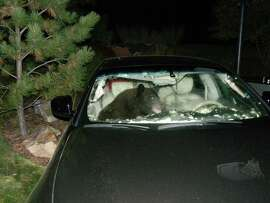Enforcement of rules has reduced problems with food-raiding bears like this one and might also be the answer to cutting down on the slaughter of wildlife by speeding vehicles.