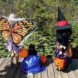 Kaylee Smith, 7, left, and Savannah Richard, 10, center, and Ani Bartelt, 5 1/2, stop to look for turtles as they and a few selected children, toured the preparations, Friday, Oct. 24, 2014, in Houston in advance of Friday's 13th annual ArBOOretum, a full day festival at the Houston Arboretum & Nature Center.