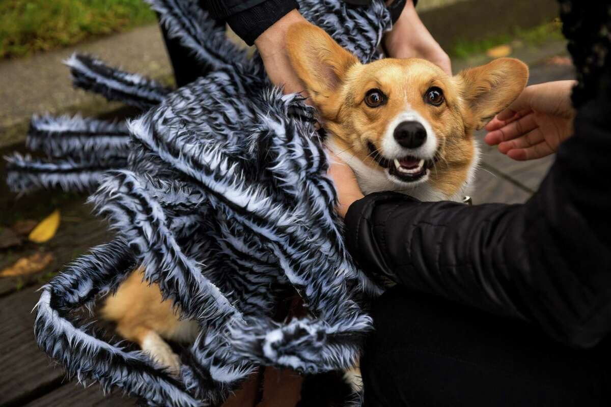 Hundreds of festive, adorable canines and their owners took part in the annual