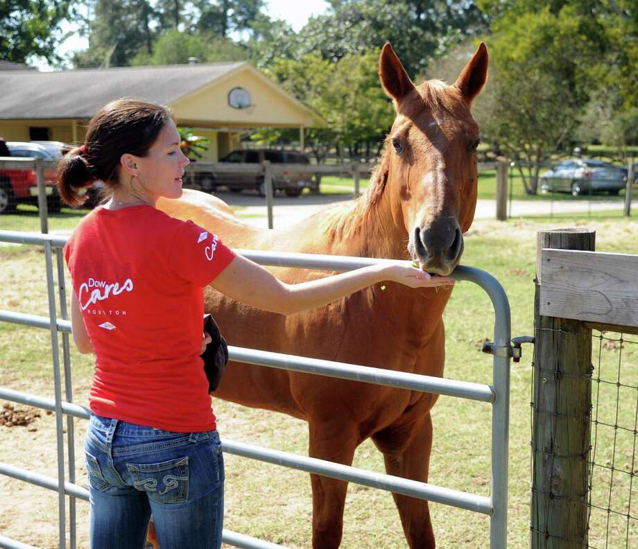 "Dow employee Michelle Boven gave resident horse ""Jazz"" a handful of treats. Dow employees enjoyed a work day at the SIRE Ranch in  Hockley on Friday, Oct. 24. Photo: Eddy Matchette, Freelance"