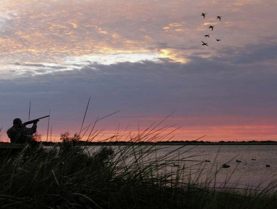 Duck and goose seasons dawn Nov. 1 in most of Texas, with the state's 100,000-plus waterfowlers facing a duck population higher than in more than a half-century, habitat conditions improved by summer rain and a migration that appears behind schedule. Photo: Picasa