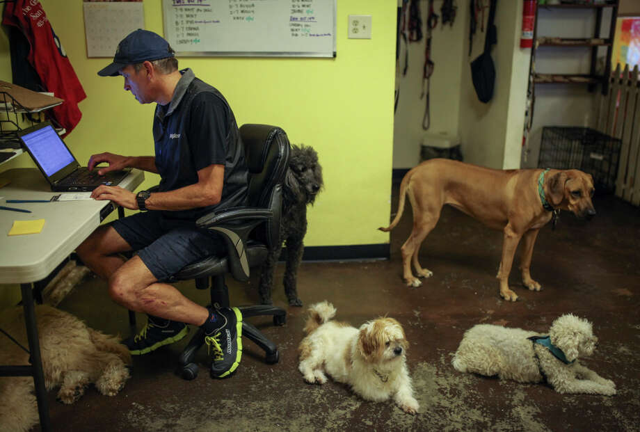 Ernie Cervantes, owner of the Grateful Dog, a doggy day care center in San Francisco, recently fell victim to a $769 phone scam that used convenient prepaid debit cards he bought at local Walgreens stores. Photo: Sam Wolson / Special To The Chronicle / ONLINE_YES