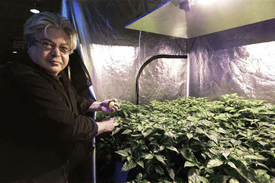 David Ittel has sold indoor gardening supplies for decades. Just don't ask him for marijuana seeds. Photo: M. Spencer Green / Associated Press / AP