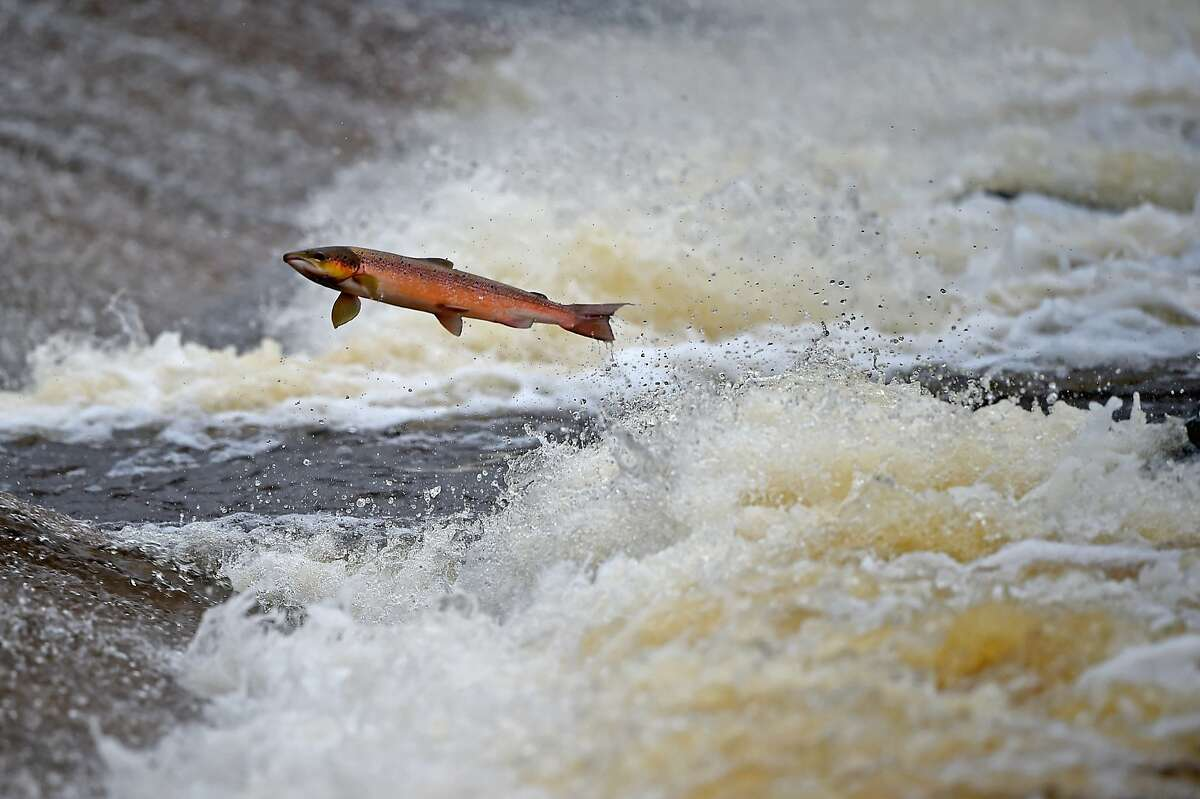 Alaska: Salmon