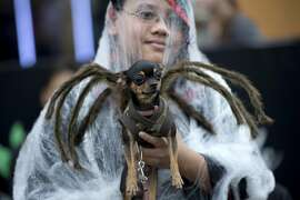 A child holds a dog dressed in a spider costume during the Cats and Dogs Halloween costume competition in Manila on October 25, 2014. The annual halloween event aims to raise funds to help animal rights group, Philippine Animal Welfare Society's (PAWS).