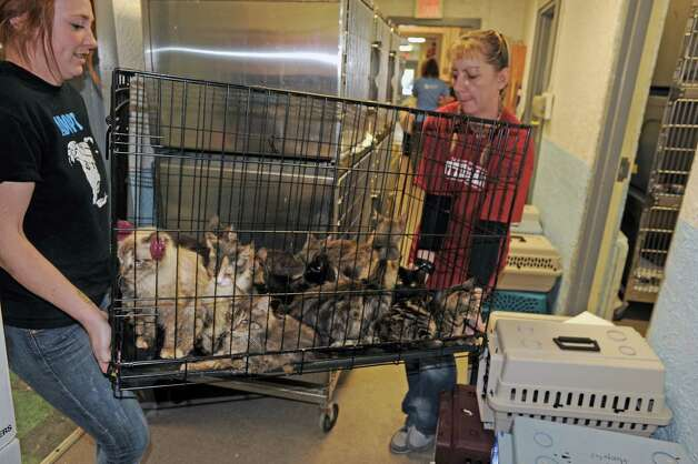 Ari Bartholomew, left, and Terry Perrier brings a cage of cats rescued from a home in  Schaghticoke in for examination at the Mohawk Hudson Humane Society on Tuesday Oct. 28, 2014 in Menands, N.Y. (Michael P. Farrell/Times Union) Photo: Michael P. Farrell