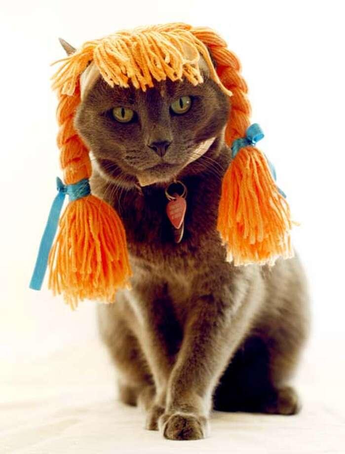 Pippi Longstocking Cat Photo: JILL JOHNSON, Various / Fort Worth Star-Telegram