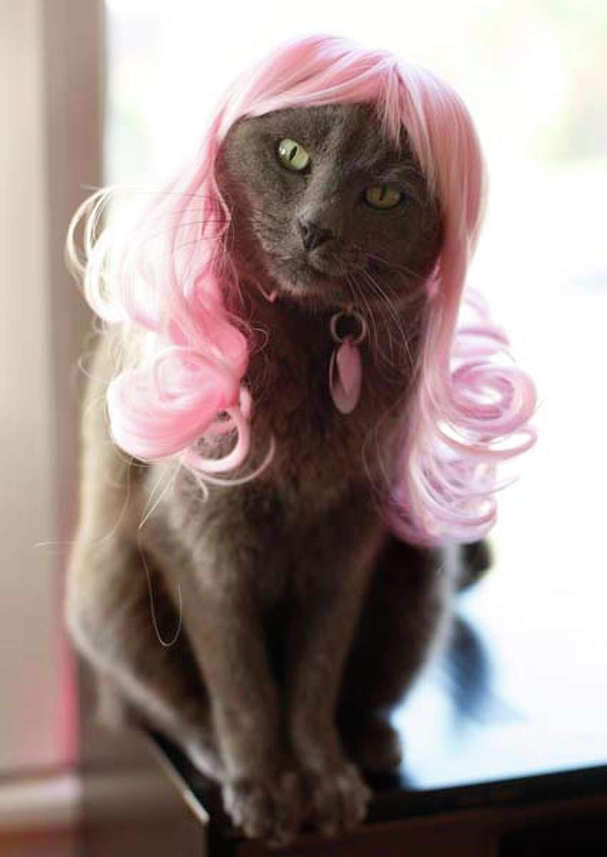 20 Cats In Costume For National Cat Day