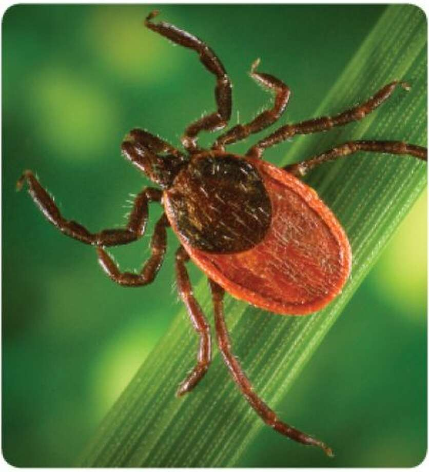 The Western Connecticut Health Network Lyme Disease Data registry recommends residents be vigilant in practicing the BLAST prevention methods: Photo: Photo: Contributed Photo St