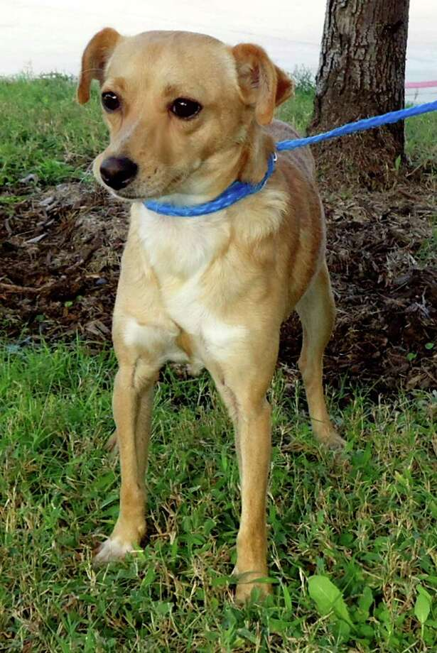 Obi will be available for adoption at 1 p.m. Sunday at Citizens for Animal Protection, 17555 I-10 W. More information: cap4pets.org or 281-497-0591.