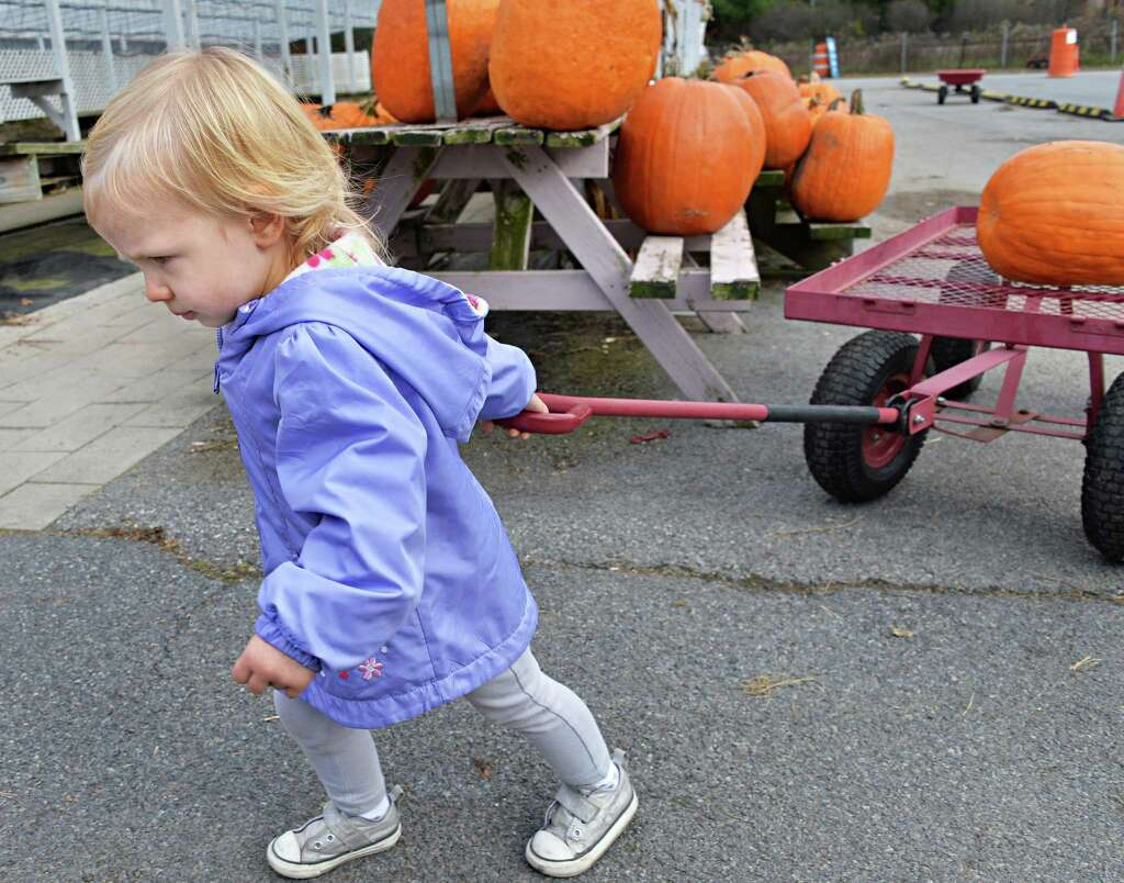 Things to do on Halloween - Times Union