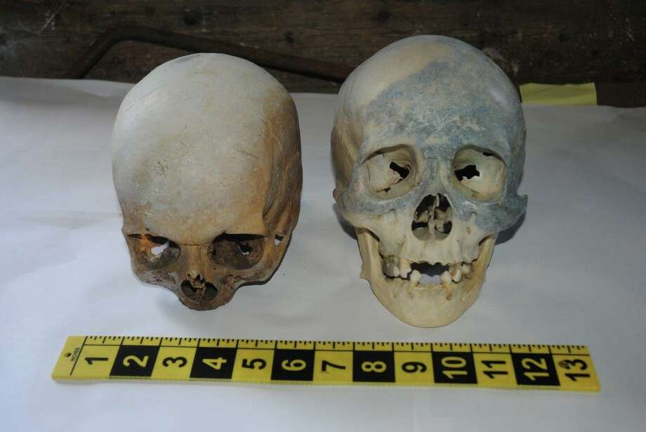 These two human skulls were discovered at the Stamford transfer station on Thursday, Oct. 30, 2014. Credit: Contributed.