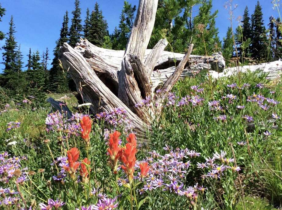 Chronicle reader Mary Churchwell of Missouri City submitted this vacation photo taken at Mount Rainier National Park in Washington. Photo: Mary Churchwell / Mary Churchwell