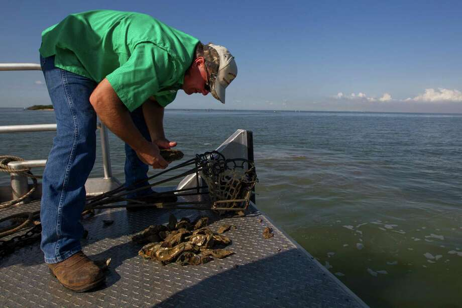 Tracy Woody sorts through oysters on Galveston Bay in 2014 in Anahuac.  Photo: J. Patric Schneider, Freelance / © 2014 Houston Chronicle