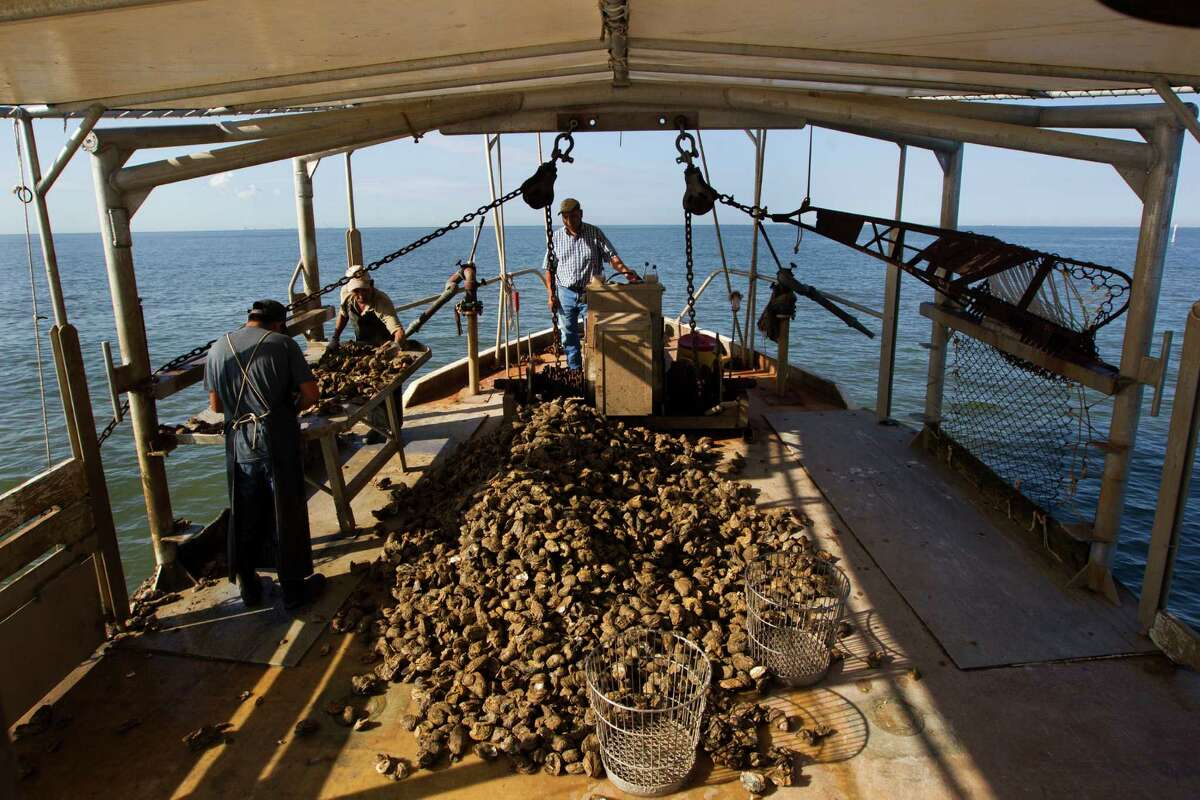 Oyster fishermen, from left, Pascual Plancarte Jr., Victor Mendoza and Capt. Pascual Plancarte dredge for oysters on Galveston Bay in Anahuac.