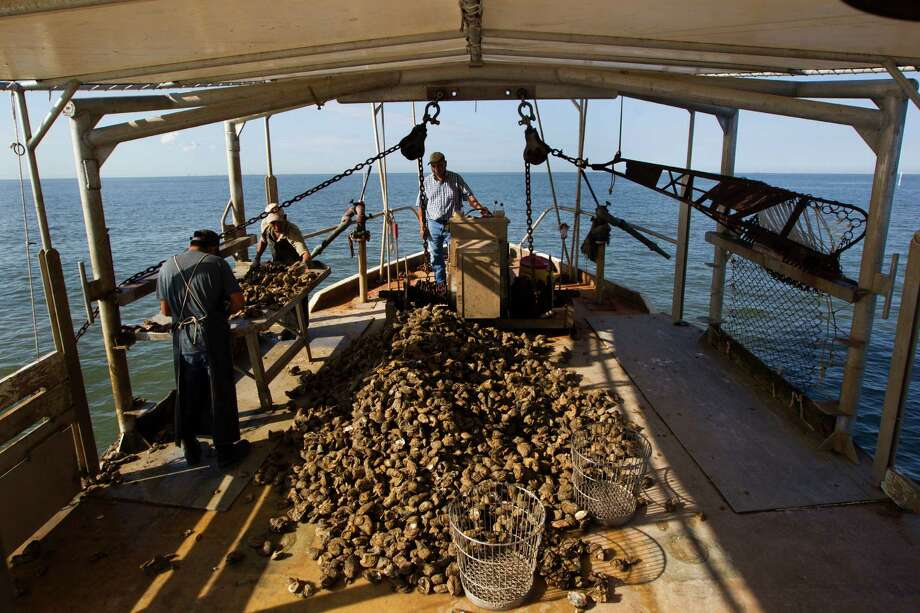 Oyster fishermen, from left,  Pascual Plancarte Jr., Victor Mendoza and Capt. Pascual Plancarte dredge for oysters on Galveston Bay in Anahuac. Photo: J. Patric Schneider, Freelance / © 2014 Houston Chronicle