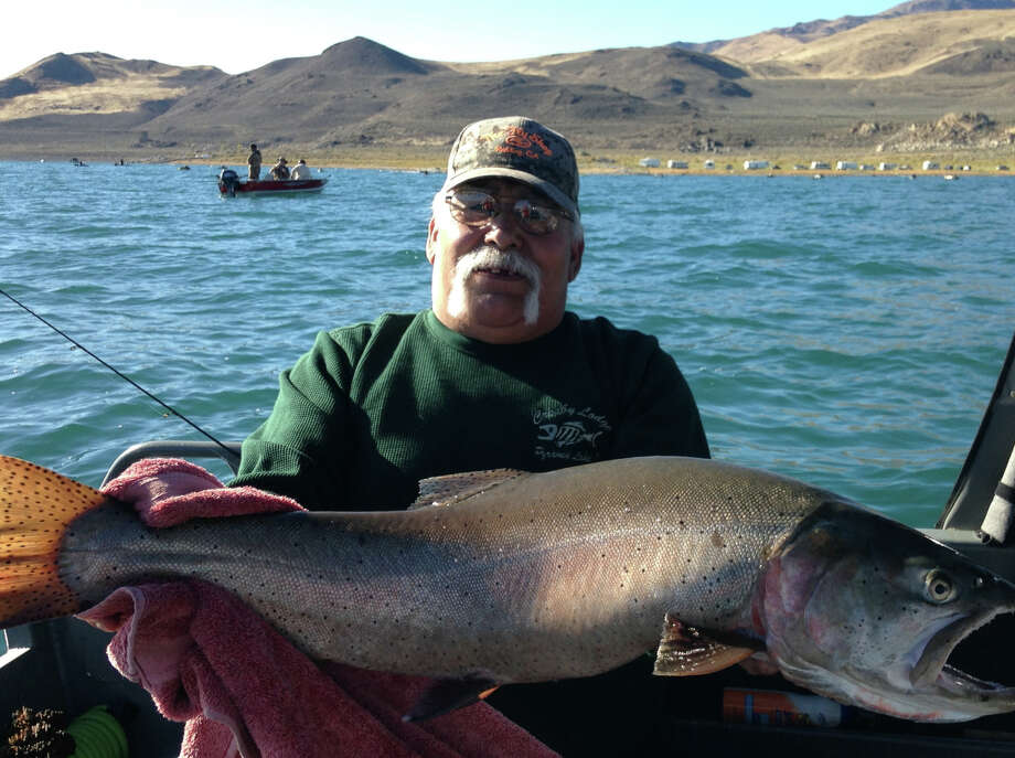Larry Nunez displays a 15-pound, 12-ounce cutthroat trout that he caught at Warrior Point at Pyramid Lake in Nevada. He hooked the fish by jigging a green-and-silver P-Line minnow. Photo: Valarie Taylor / Valarie Taylor / ONLINE_YES