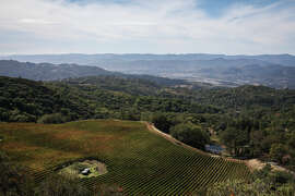 Pine Mountain Vineyards is part of the recently approved Pine Mountain-Cloverdale Peak appellation.