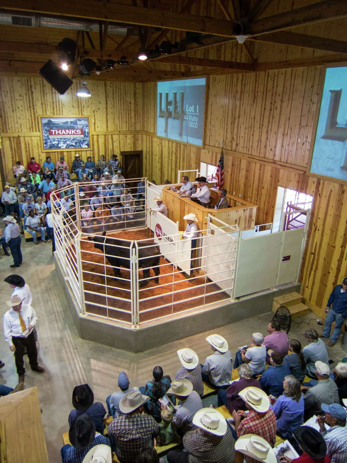 Cattle are auctioned at 44 Farms in central Texas.