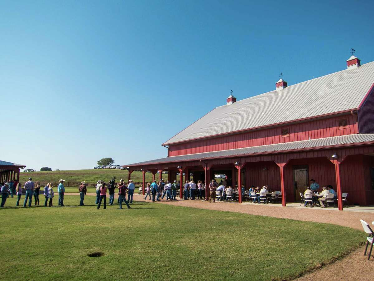 A line forms before the cattle auction at 44 Farms in central Texas.