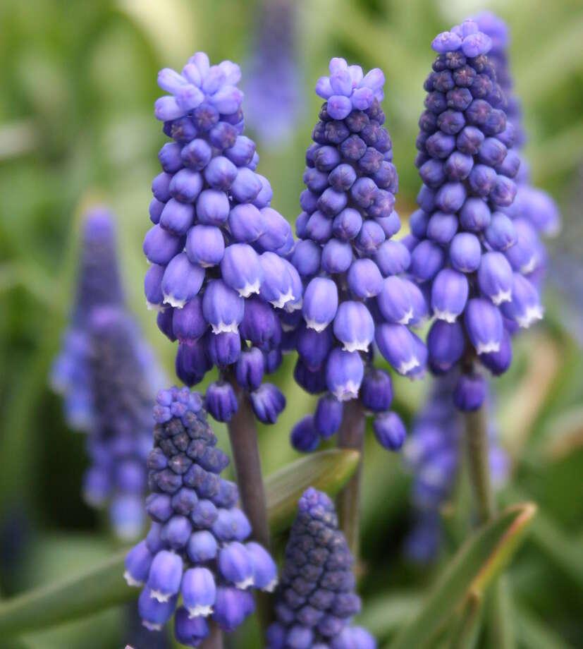 Garden Design: Garden Design With Plant Pansies Garden Club With