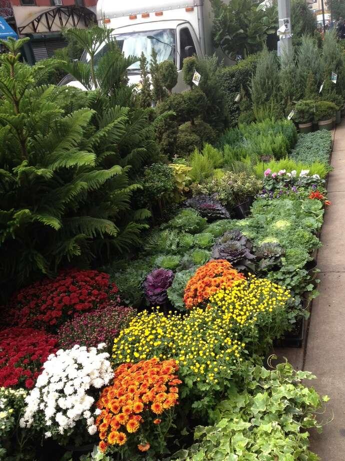 Chelsea's Flower District makes fall in New York seem like spring. (Jennifer Post)