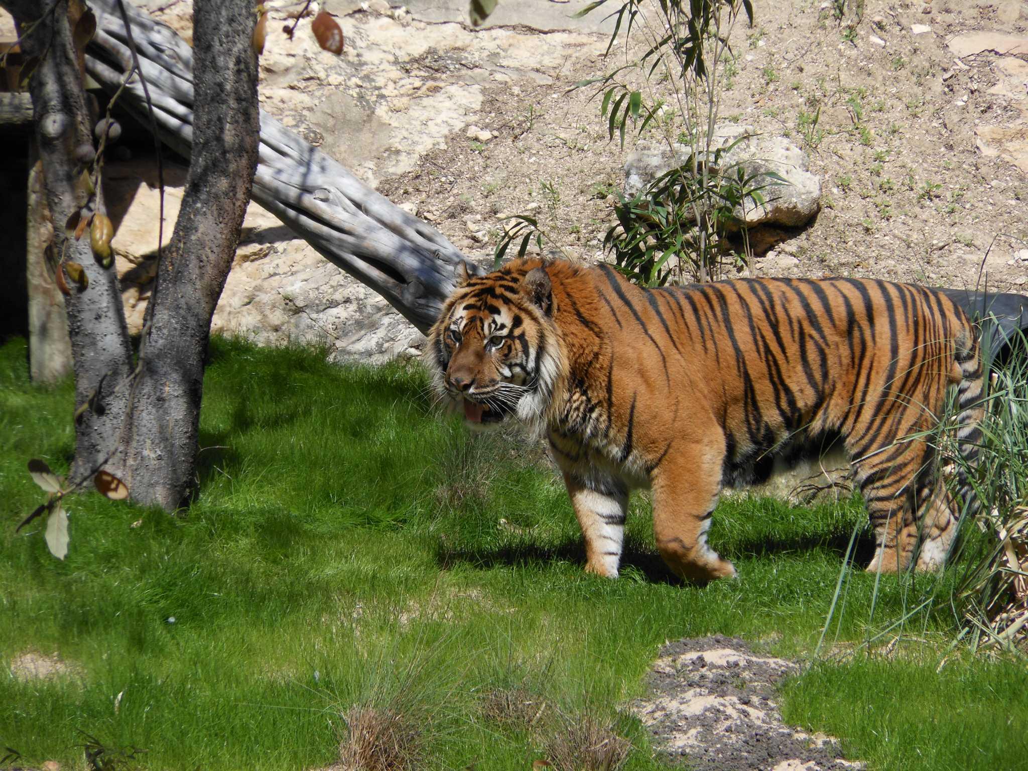 Popular San Antonio Zoo Animal Died Tuesday Morning San
