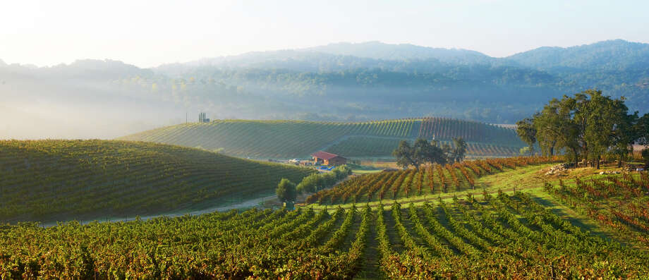 Tablas Creek Vineyard and Winery produces French Rhône-style wines in Paso Robles, California. The award-winning wines began with vine clippings imported from France. Photo: Courtesy Photo / Courtesy Photo / / Chris Leschinsky 2009