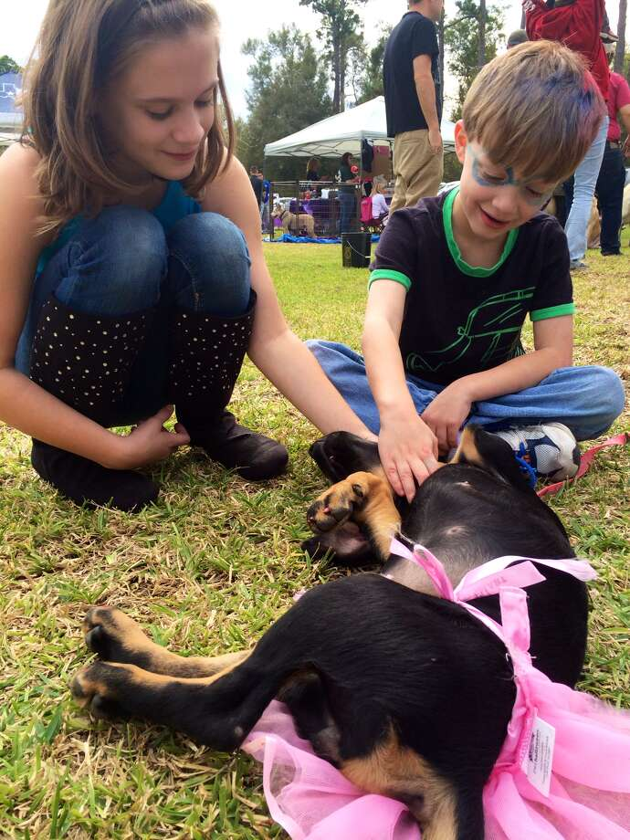 The American Cancer Society held their Bark for Life event at Tyrrell Park on Saturday, Nov. 8, 2014. This event brought out pups of all shapes and sizes to raise money that benefits patient services and programs. Photo: The Enterprise
