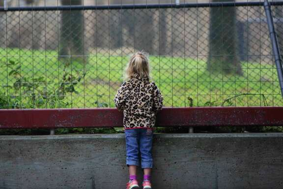 A girl looks at animals through a fence near the entrance of the San Francisco Zoo, where a gorilla died over the weekend.