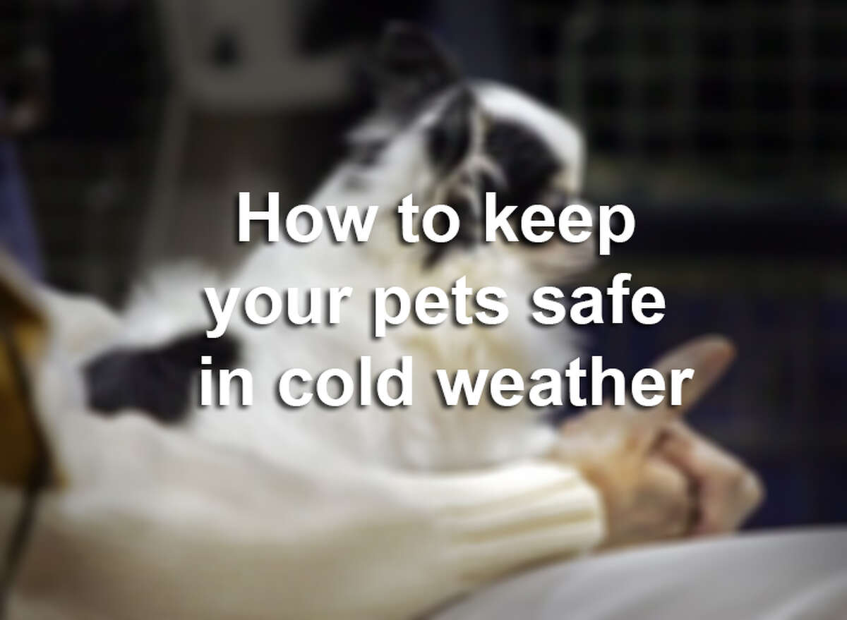 San Antonio has laws that protect pets from neglect including exposure to harsh weather. Residents can report possible animal ordinance violations by calling the City's 3-1-1 Customer Service line. Here are some things you can do to protect your pets from cold temperatures.