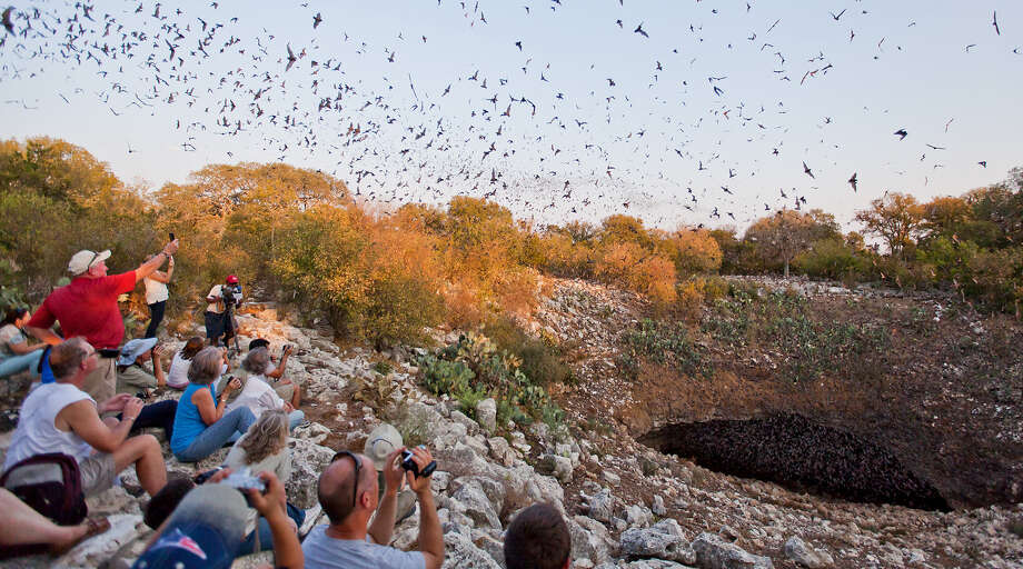A crowd watches Mexican free-tailed bats emerge from the Bracken Bat Cave in 2011. The cave houses an estimated 20 million bats. Photo: Photos By Marvin Pfeiffer / Northeast Herald / Prime Time Newspapers 2011