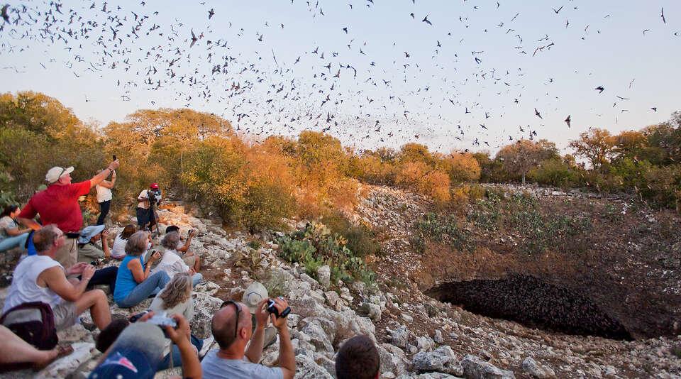 16 Bracken Bat Cavenear Natural Bridge Photo 7126179