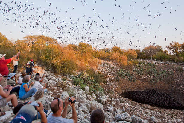 A crowd watches Mexican free-tailed bats emerge from the Bracken Bat Cave in 2011. The cave houses an estimated 20 million bats.